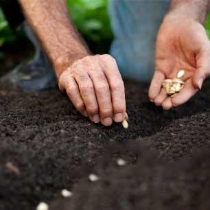 Хоби <br/> семена