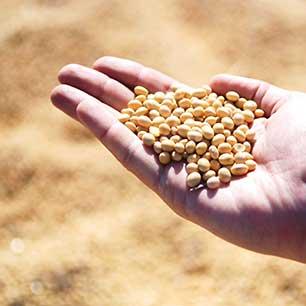 Професионални <br/>семена