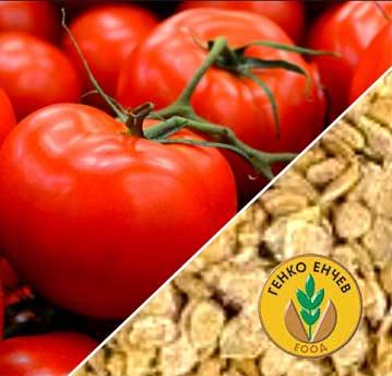 Семена за домати – Генко Енчев