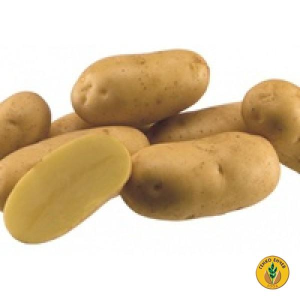 Картофи Аринда ( Arinda ) от производител Agrico
