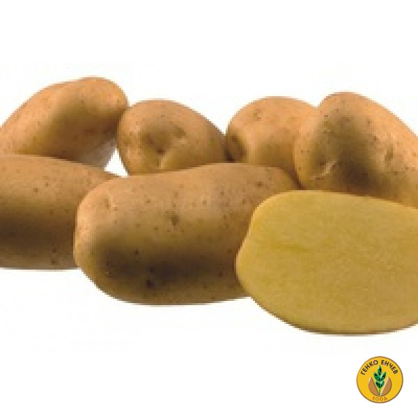 Картофи Агрия ( Agria ) от производител Agrico