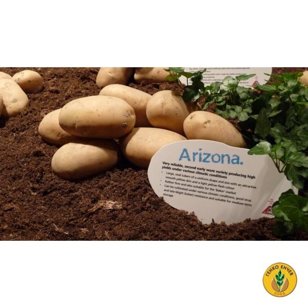 Картофи Аризона ( Arizona ) от производител Agrico