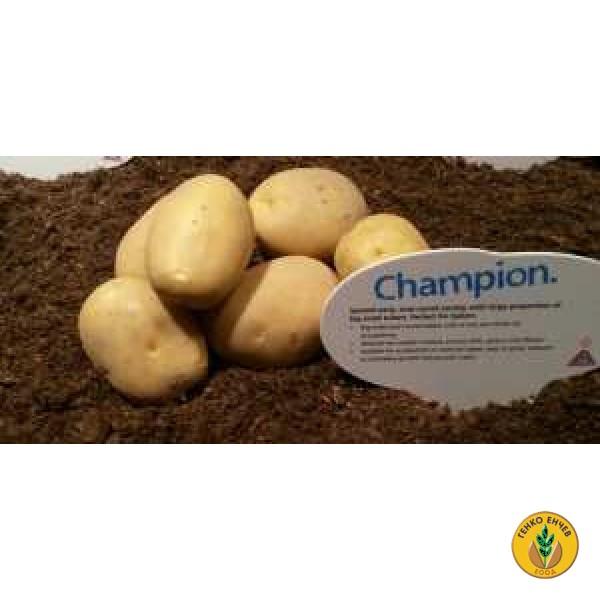 Картофи Констанс ( Konstans ) от производител Agrico