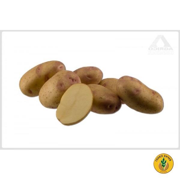 Картофи Пикасо ( Picaso ) от производител Agrico