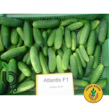 Корнишони Атлантис F1 ( Atlantis F1 )