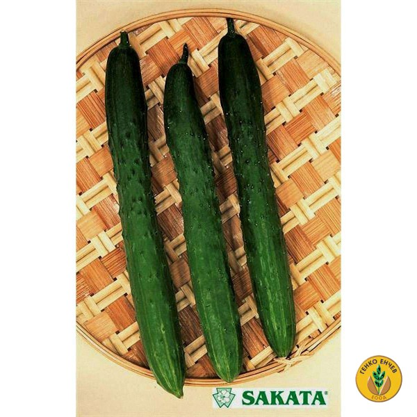 Краставици Тести грийн F1 ( Tasty green F1 ) от производител Sakata