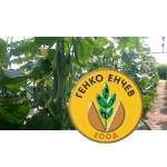 Краставици Бахия F1 ( Bahia F1 ) от производител Clause