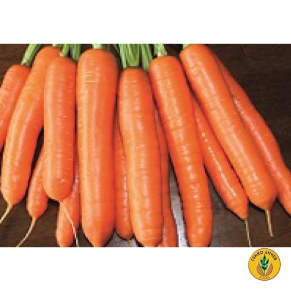 Моркови Карболи F1 ( Carboli F1 ) от производител Seminis