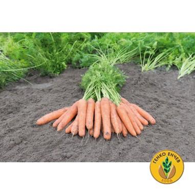 Моркови Самсон ( Samson )