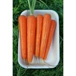 Моркови Субито F1 ( Subito F1 ) от производител Vilmorin