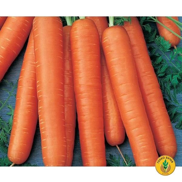 Моркови Тушон ( Tushon ) от производител Clause