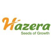 Hazera (2)