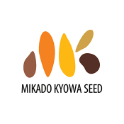 Mikado (1)